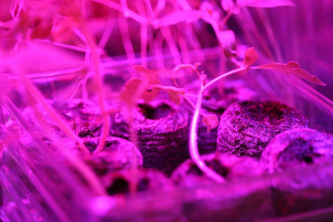 Bio Art by Suzanne Anker: Astroculture